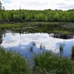 Wetland protections face renewed scrutiny